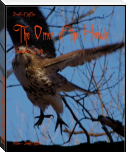 The Omen of the Hawk