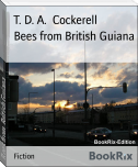 Bees from British Guiana