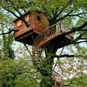 Dave's Treehouse